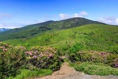 Sikt från Jane Bald Roan Mountain NC och TN Arkivfoto
