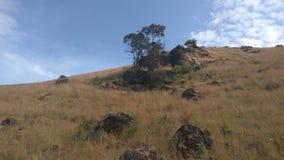 Sikt från Kodachadri den Trekking slingan Arkivfoto