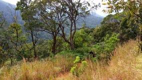 Sikt från Kodachadri den Trekking slingan Arkivbilder
