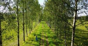 Sikt från nivån av blast av träd på den unga kvinnan med ett långt ganska hår och i en blå klänning som går vidare björken stock video