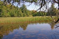 Sikt från skogen royaltyfri fotografi