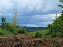 Sikt från skogen Arkivfoton