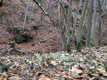 Sikt från Transylvania Royaltyfri Foto