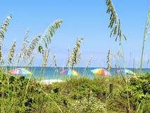 sikt för paraply för strandpete st Royaltyfri Foto