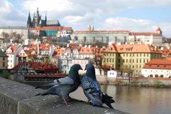 Sikt för Prague slott från den Charles bron Arkivbild