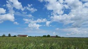 sikt för sommar för vinkelfältgräs wide Arkivfoto