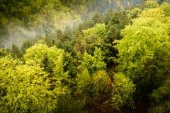 Sikt från ovannämnt av en grön stor skog med Royaltyfri Fotografi