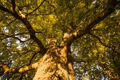 Sikt in i överkanten av trädet arkivbilder