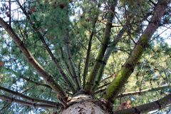 Sikt in i barrträdöverkanten royaltyfri foto