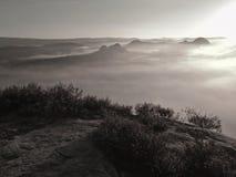 Sikt in i den djupa dimmiga dalen över tofsar av ljung Kullemaxima ökande från höst som dimmig bygd bölar, dimman, göras randig Arkivfoto