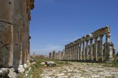Sikt i den stora kolonnaden av Apamea den forntida staden i Syrien Arkivfoto