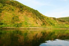 Sikt in i en vingård på den moselle floden Fotografering för Bildbyråer