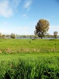 Sikt i Nederländerna på floden maasen Royaltyfri Bild