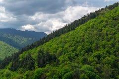 Sikt med berg forested - den Postavarul massiven - Brasov, Rum?nien royaltyfri fotografi
