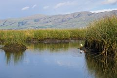 Sikt in mot beskickningmaximum; vattenvägar på; Don Edwards Wildlife Refuge södra San Francisco Bay, Alviso, San Jose, Kalifornie arkivbild