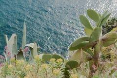 Sikt ner till medelhavet från italiensk kust Royaltyfri Fotografi
