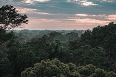 Sikt på amasonrainforesten under solnedgång arkivfoto