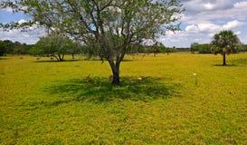 Sikt på att ligga på stäppdjuren i löst beta på gräset mellan träden och palmträden Fotografering för Bildbyråer
