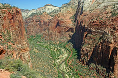 Sikt på den Zion kanjonen fotografering för bildbyråer
