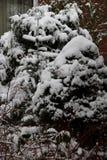 Sikt på en buske i trädgården som är full med snö på en kall vinterdag i områdesemslanden Tyskland royaltyfri foto