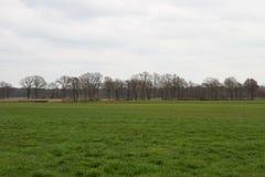 Sikt på en grässlätt och den molniga himlen i rhedeemsland Tyskland royaltyfri fotografi