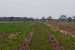 Sikt på en naturlig bana mellan odlingsmarken i rhedeemsland Tyskland royaltyfria foton