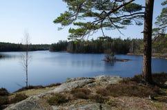 Sikt på en skogsjö Royaltyfria Bilder