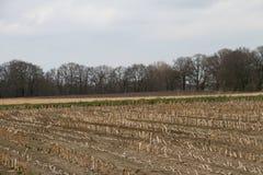 Sikt på ett kultiverat fält med träd i horisonten i rhedeemsland Tyskland royaltyfri fotografi
