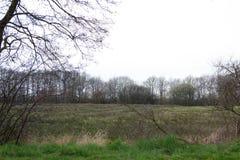 Sikt på ett uncultivated naturligt fält i rhedeemsland Tyskland royaltyfri foto