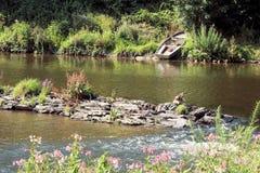 Sikt på floden Semois, belgare Ardennes royaltyfria foton