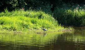 Sikt på floden Semois, belgare Ardennes royaltyfri foto