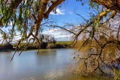 Sikt på höstlandskap av floden och träd i solig dag arkivfoton