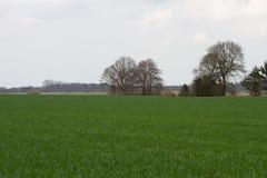 Sikt på kultiverade fält i rhedeemsland Tyskland royaltyfria bilder