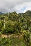 Sikt på nationalparkalejandroen de humboldt med flodKuba arkivbild