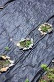 Sikt på odlingslott Arkivfoto