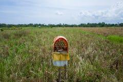 Sikt på risfält i Canggu, Bali Arkivfoton