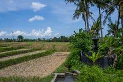 Sikt på risfält i Canggu, Bali Royaltyfria Foton