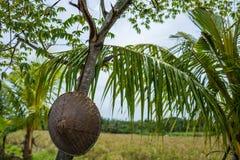 Sikt på risfält i Canggu, Bali Arkivbild
