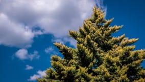 Sikt på trädet mot den blåa himlen Royaltyfria Bilder