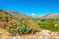 Sikt på tyst grön valey med druvakolonier på grek Isla Royaltyfria Bilder