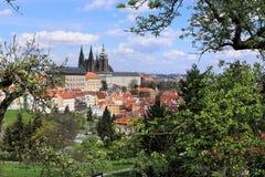 Sikt på vårPrague den gotiska slotten med de gröna natur- och blomningträden, Tjeckien Royaltyfri Foto