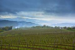 Sikt på vingård Arkivbilder