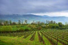 Sikt på vingård Arkivfoto