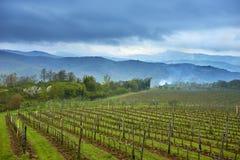 Sikt på vingård Royaltyfri Bild