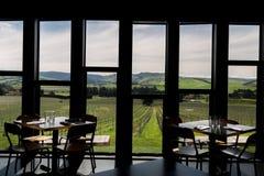 Sikt på vingård i Nya Zeeland royaltyfri foto