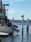 Sikt Punta Gorda, Florida för öga för fågel` s Royaltyfri Bild