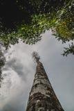 Sikt som upp ser trädet Arkivbild
