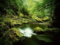 Sikt till bergströmmen nedanför gröna sidor av akacia, bokträd och ekar Vattennivån gör gröna reflexioner Början av summ Royaltyfria Bilder