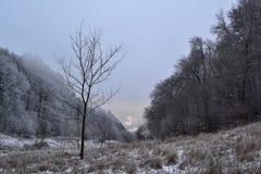 Sikt till en dal mellan träd i vinter Royaltyfria Bilder