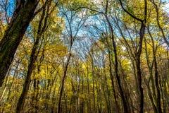 Sikt till himmel till och med djup färgrik höstskog Arkivbilder